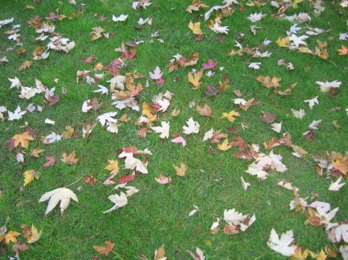 More and more leaves on the ground